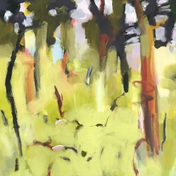 Dry forest 5